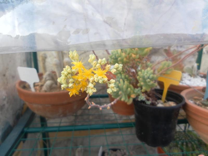 bientot des fleuraisons Sam_1011