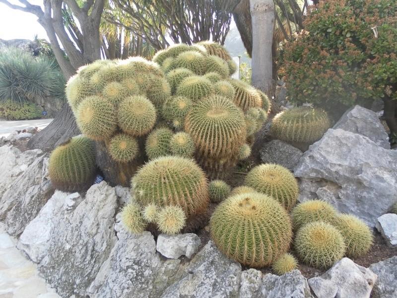 jardin exotique de Monaco Sam_1311