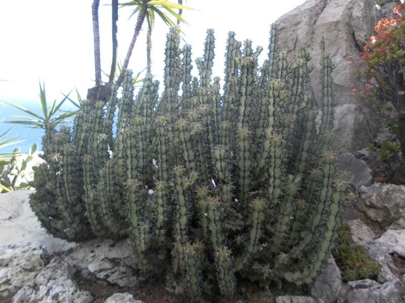 jardin exotique de Monaco Sam_1319