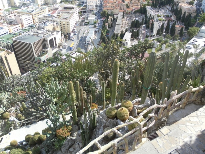 jardin exotique de Monaco Sam_1320