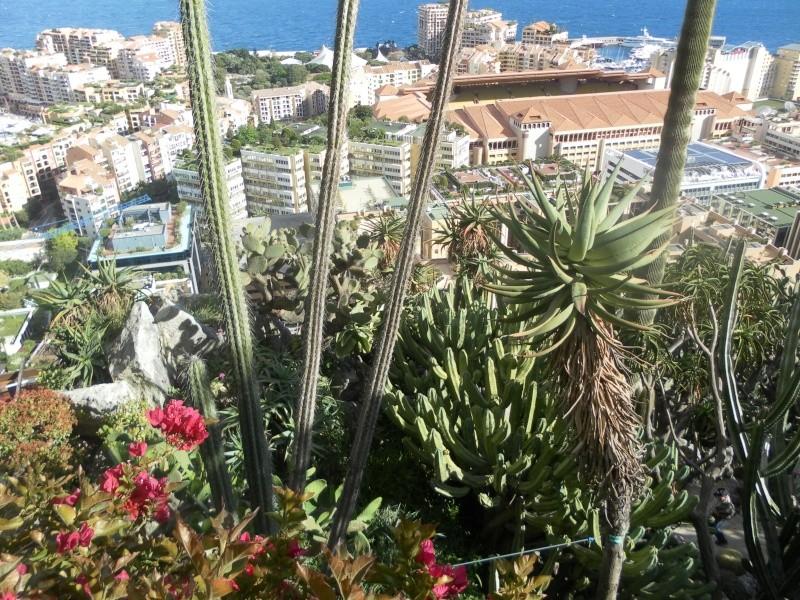 jardin exotique de Monaco Sam_1411