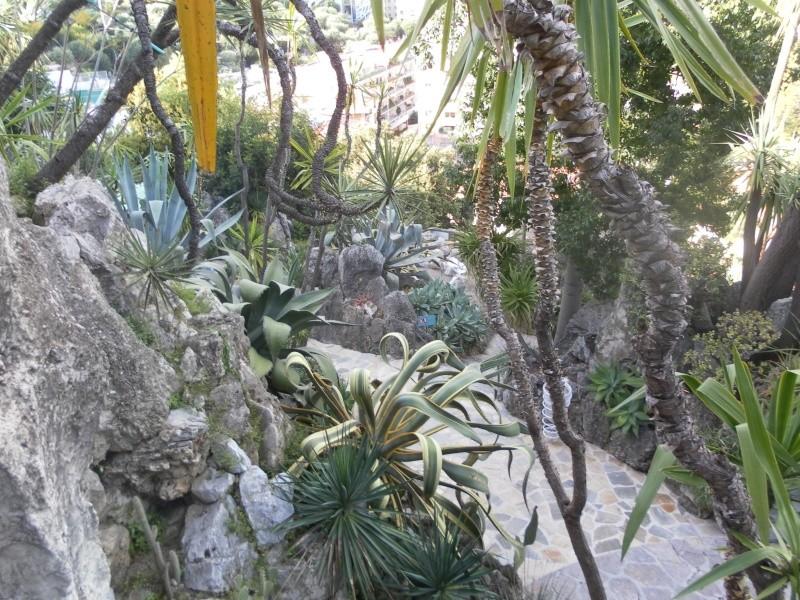 jardin exotique de Monaco Sam_1413