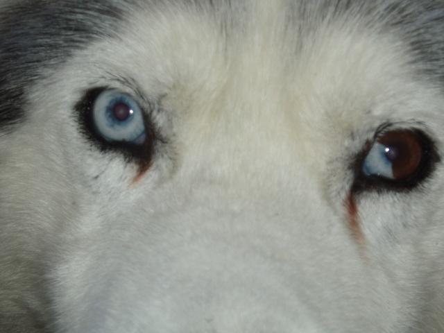Le post de mon Snow ...ma dernière adoption + ses copains - Page 2 P3209111