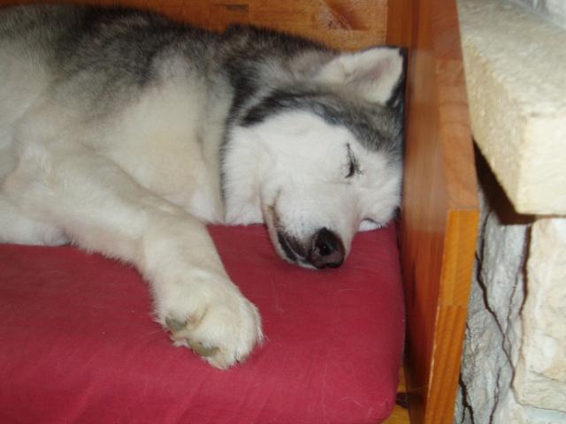 Le post de mon Snow ...ma dernière adoption + ses copains - Page 2 P4069111