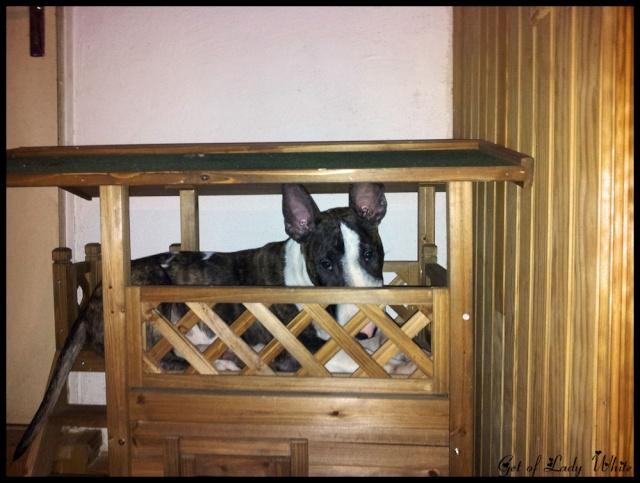 Photos du coin dodo et repas de vos chiens 22_11_11