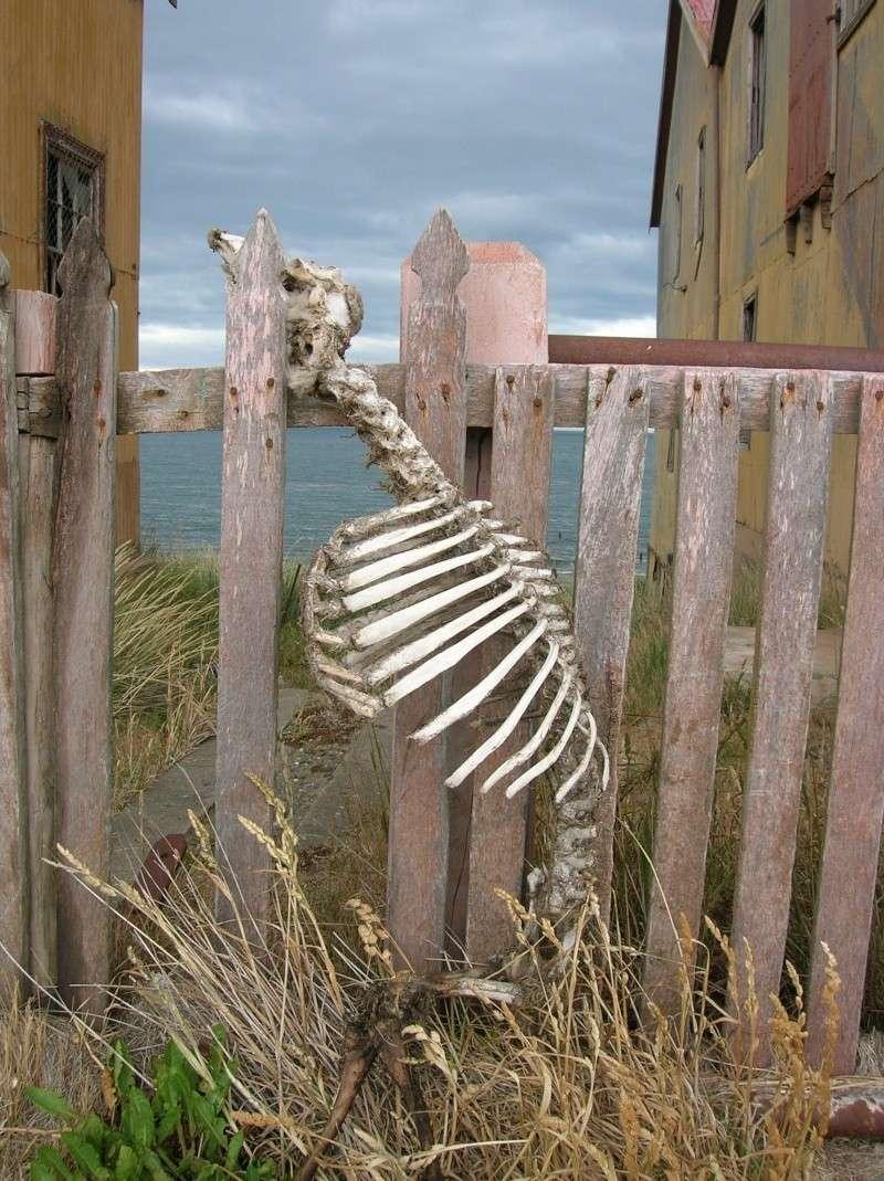 [ Chili ] Balade dans le détroit de Magellan avec Panoramio. Mouton10