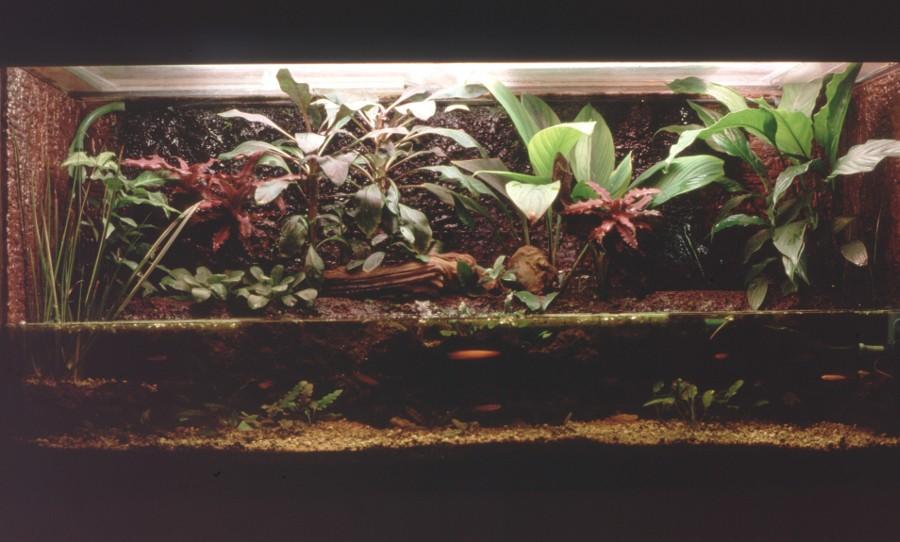 Bidouille aquaterrarium 1988-010