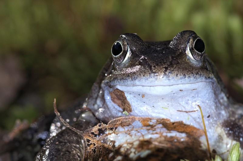 Sauvetage d'amphibiens _dfg7510