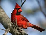 Haiti-église-dialogue : Le cardinal s'est posé sur un arbre ... Th10