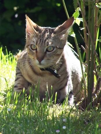 SOS. Βοηθείστε να σωθεί μικρό γατάκι! - Σελίδα 2 Oresti10