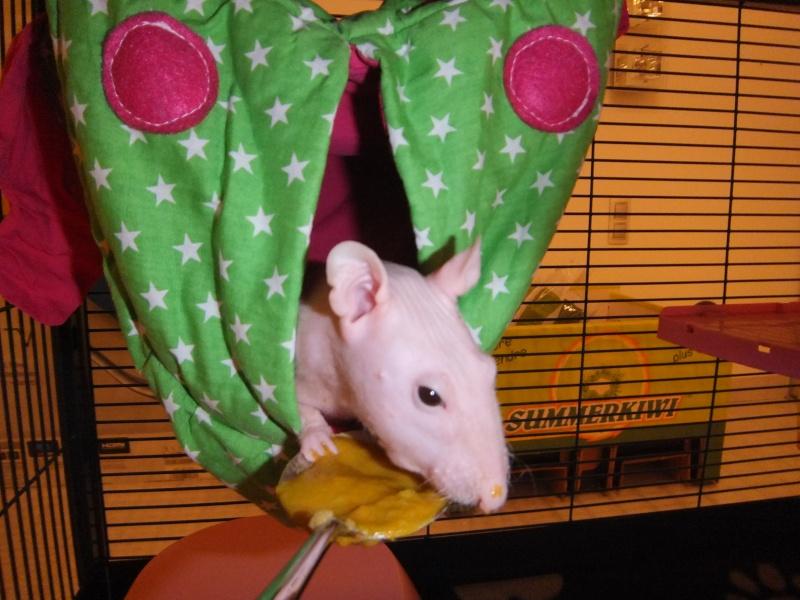 ratons - Page 3 _scf1116