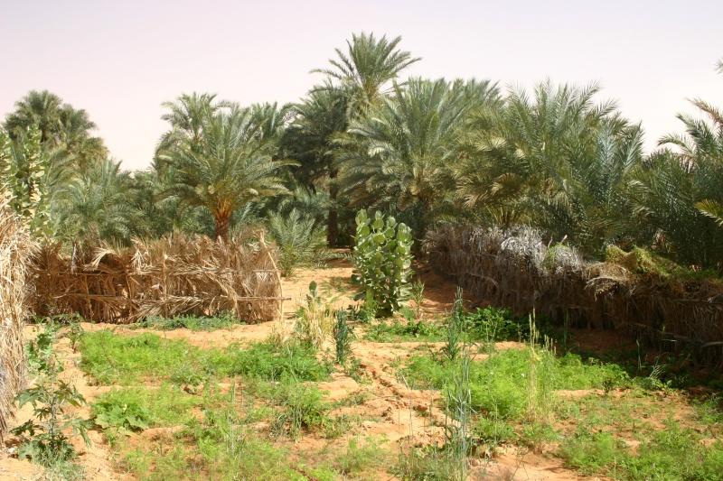 2006 Mauritanie en 4x4 bimoteur 2cv_bi46