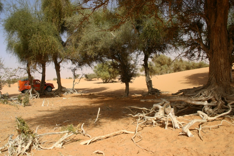 2006 Mauritanie en 4x4 bimoteur 2cv_bi49