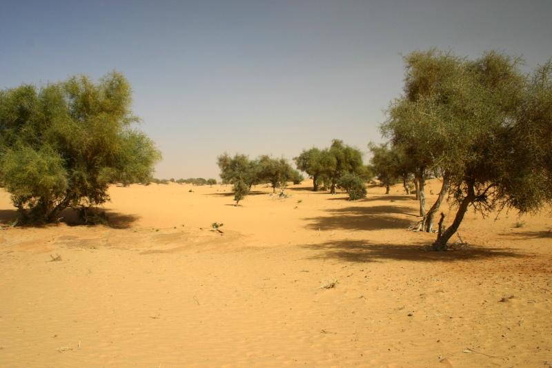 2006 Mauritanie en 4x4 bimoteur 2cv_bi50
