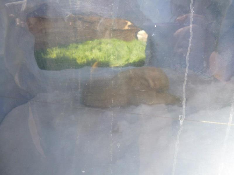 Une journée a Marineland le 14 avril 2013 avec un temps d'été 11210