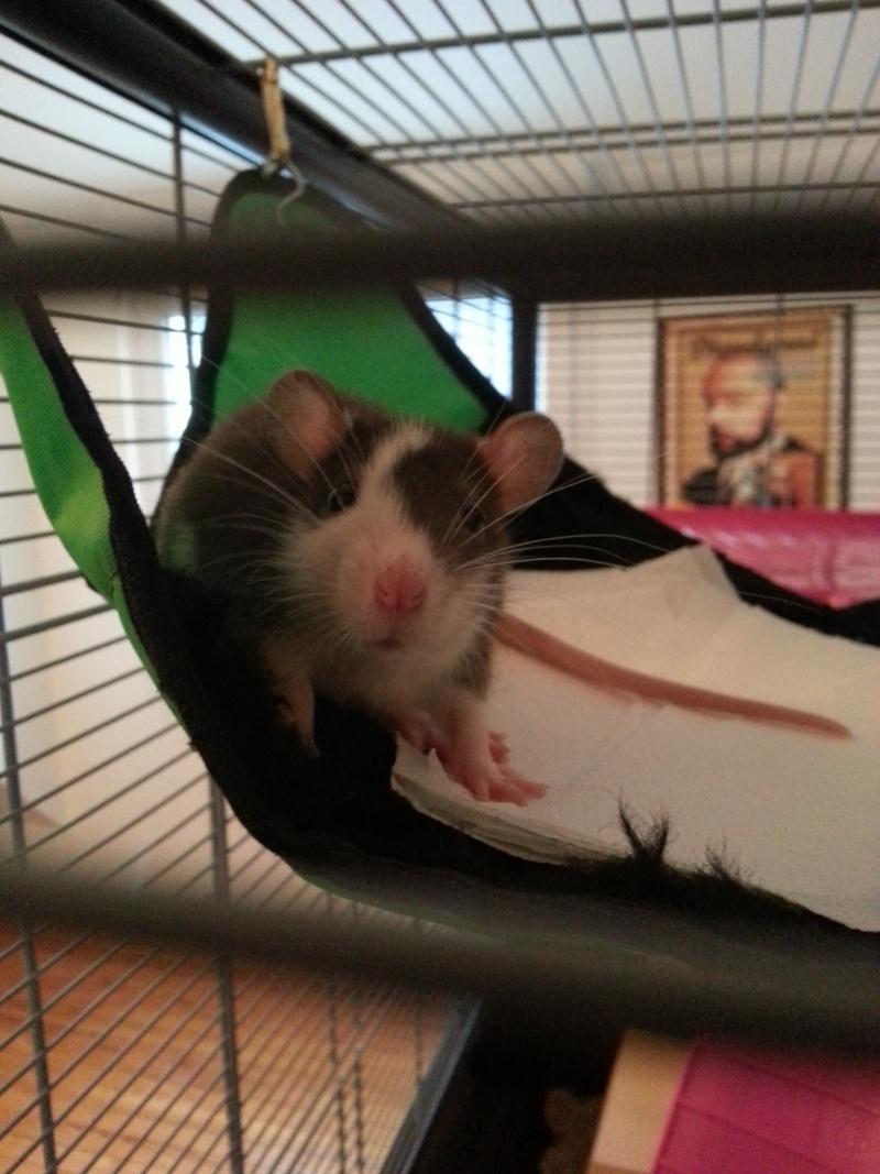 Les rats de Laura 20140213