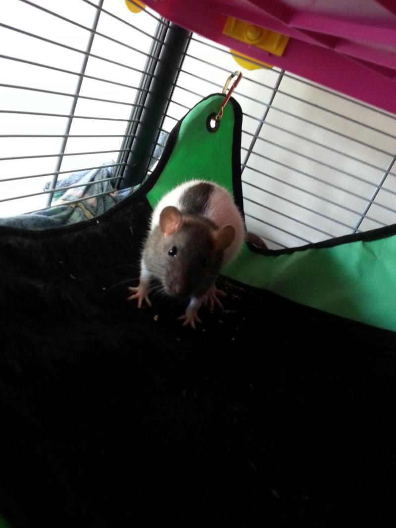 Les rats de Laura 20140224