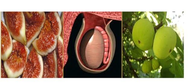 Хранене за здраве Figs-t10