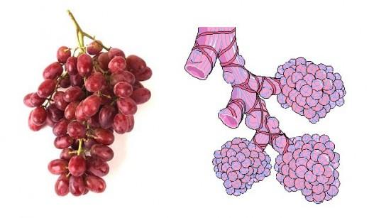 Хранене за здраве Grapes10