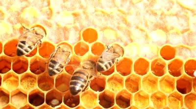 Хранене за здраве Honey-10