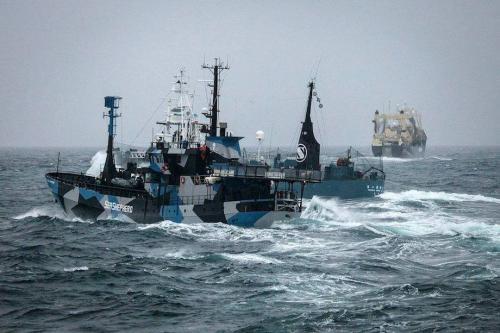 Chasse à la baleine Japon10