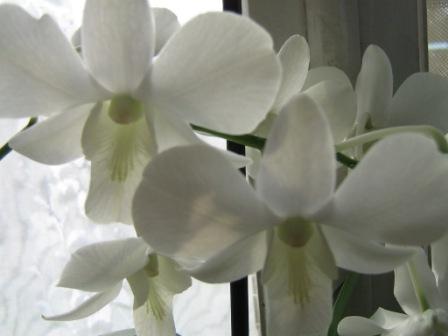 Разведение орхидей. - Страница 2 Img_1654