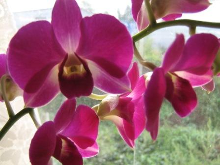 Разведение орхидей. - Страница 2 Img_1655