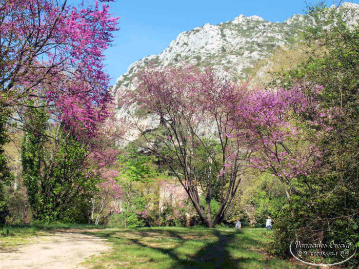 Ballade pour ce beau printemps 2014 1310
