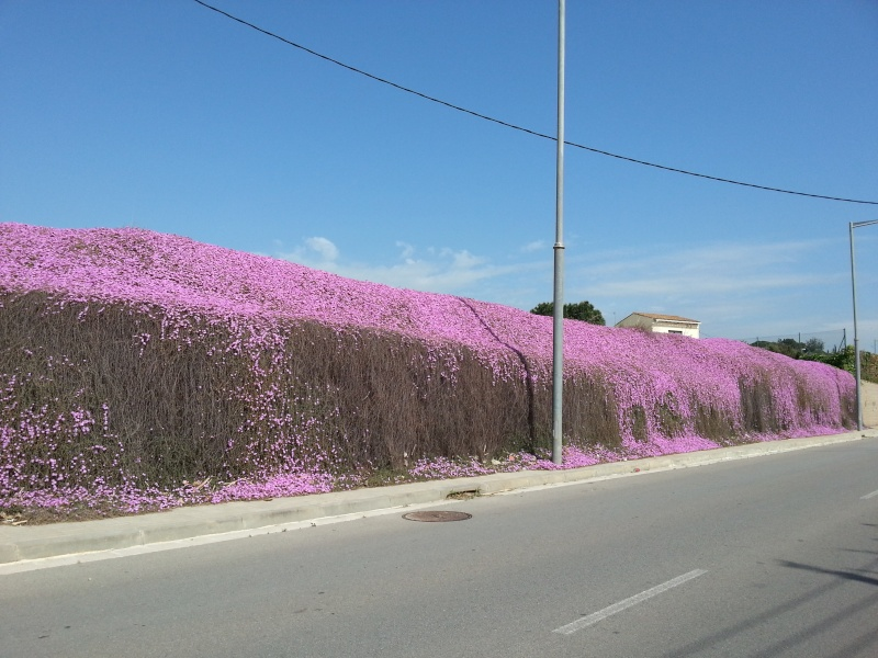 Incroyable mur fleuri 20140427