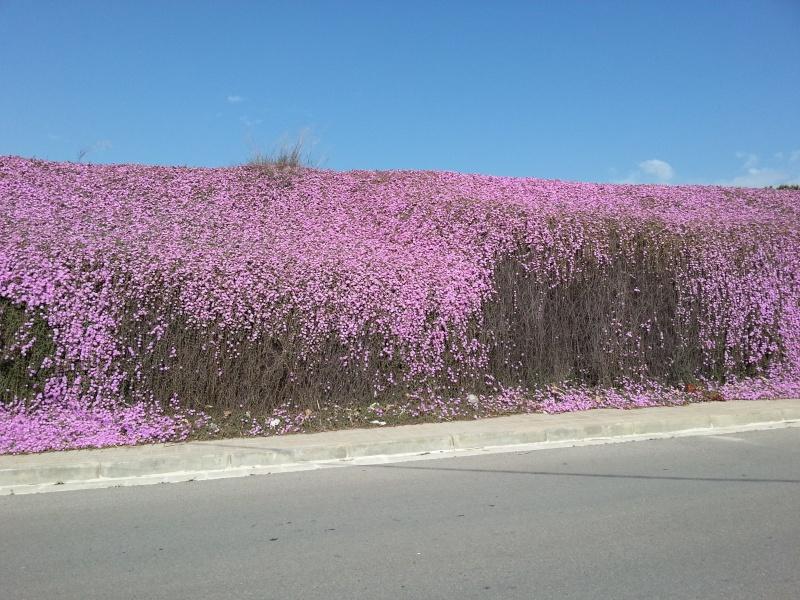 Incroyable mur fleuri 20140428
