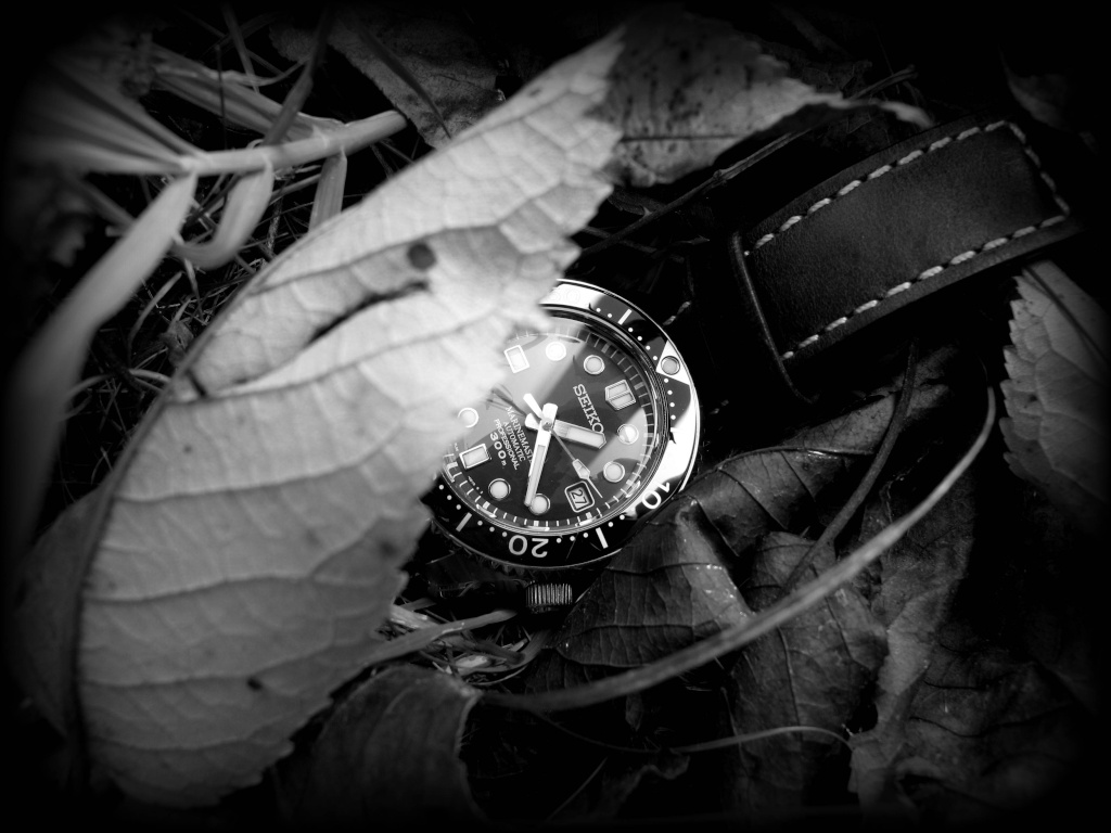 Ma Seiko MM 300, la montre de mes 50 ans... Mm_aut14