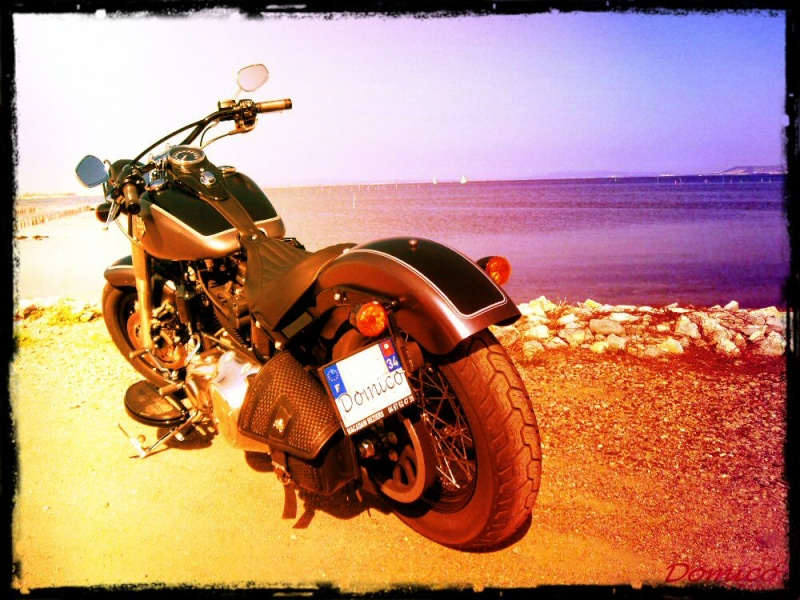 Softail Slim sous tous ses angles ! - Page 3 18925310