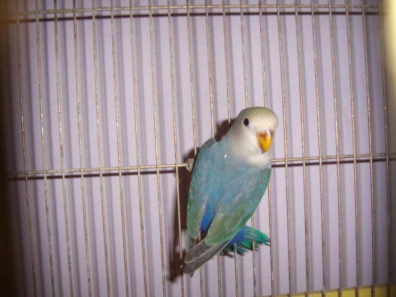 Moje ptice - Page 2 100_6710