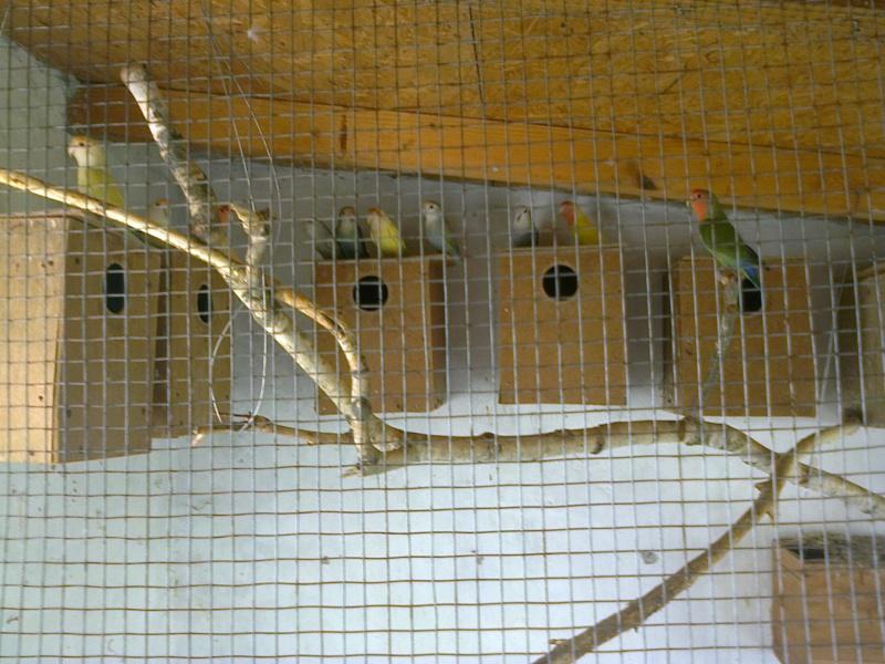 Moje ptice - Page 2 Fotogr10