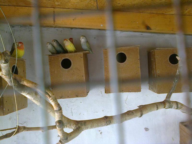 Moje ptice - Page 2 Fotogr12