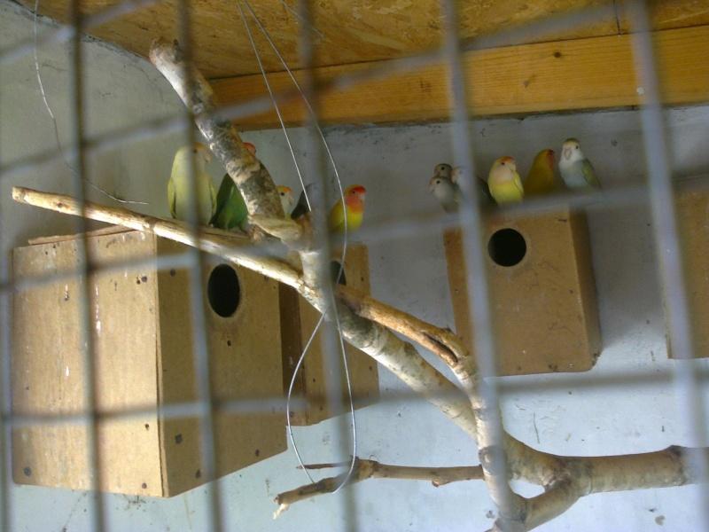 Moje ptice - Page 2 Fotogr13