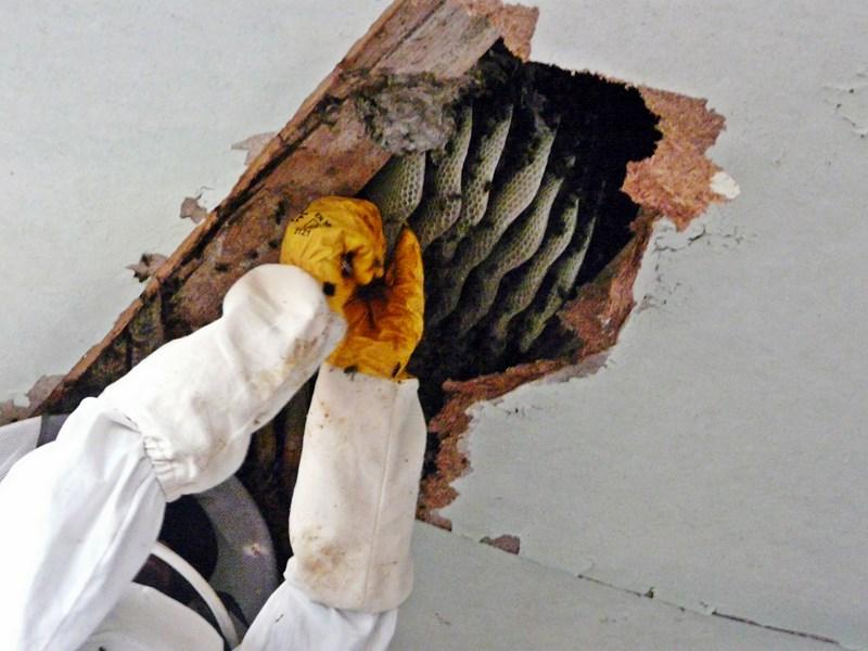 photo recup' essaim installé: P1220017