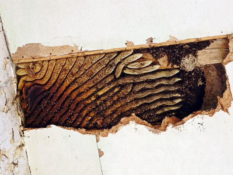 photo recup' essaim installé: P1220018