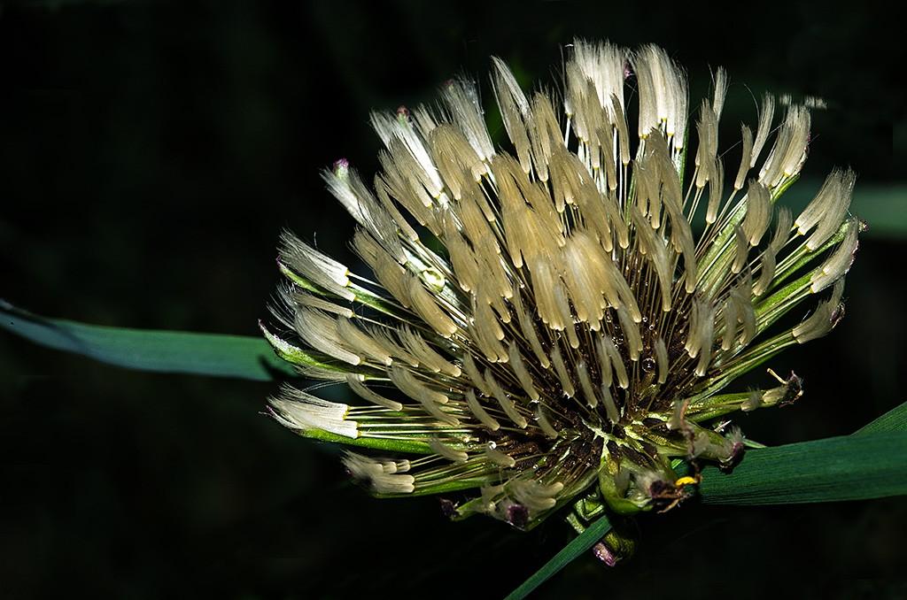 Botanik ... (série) Botani11