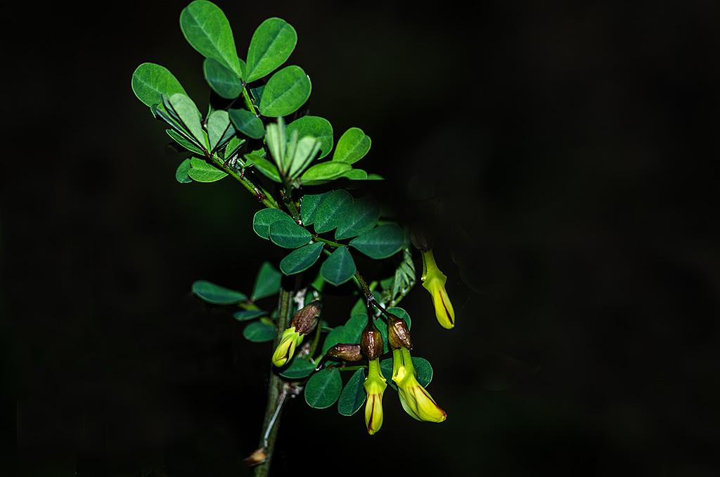 Botanik ... (série) Botani12