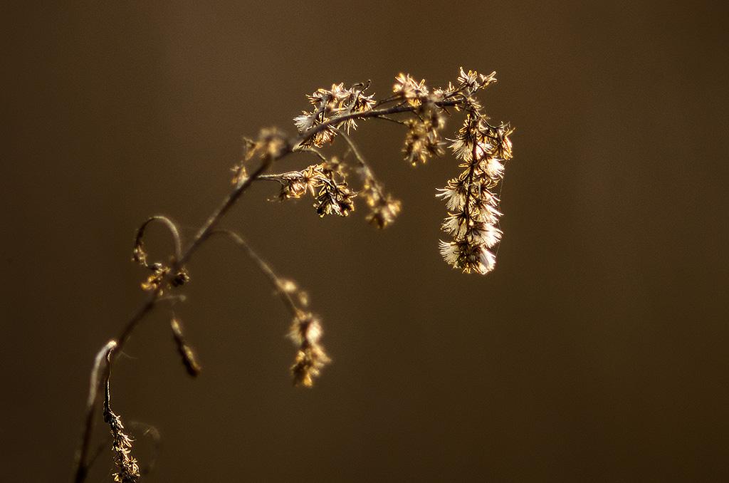 Botanik ... (série) Botani14