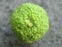 Identification arbre (exotique?) Dsc01511