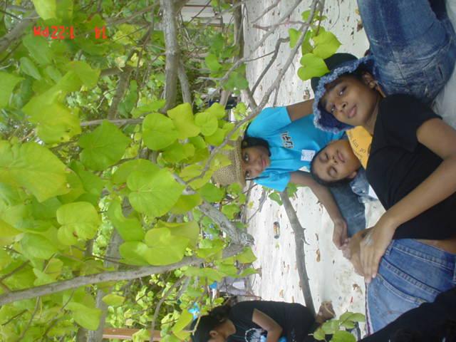 MALDIVES BITUN (GALS) Copyof10