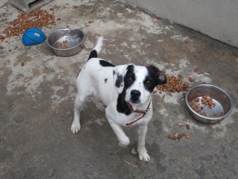 NEVADA (petite femelle noire et blanche) P3150610
