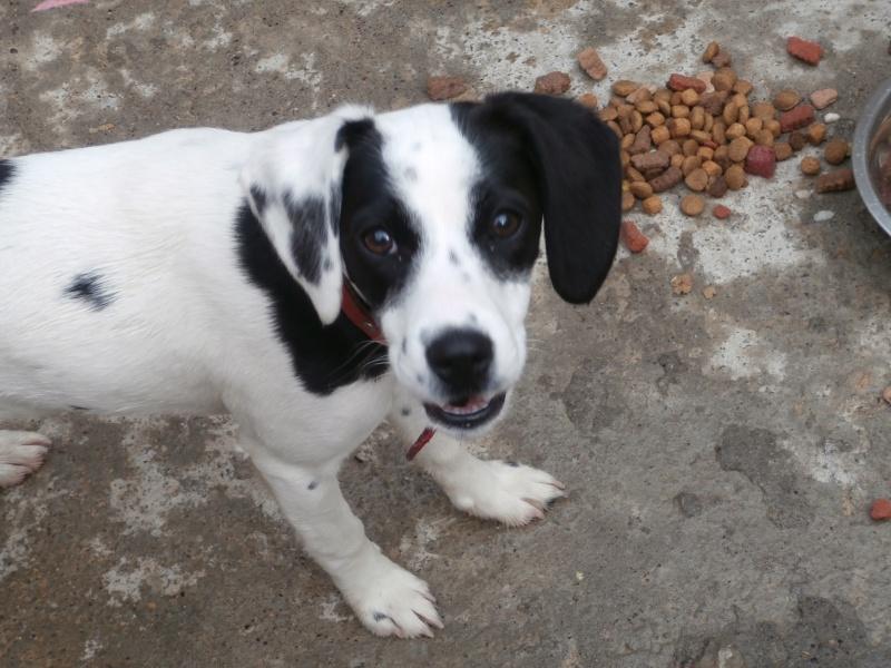 NEVADA (petite femelle noire et blanche) P3150611