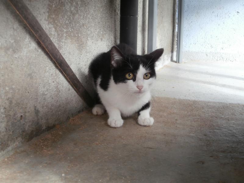 AMOUR ( femelle noire et blanche) Pa190140