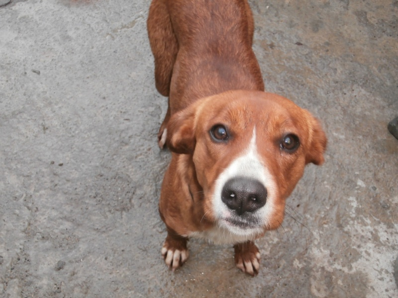 CAYENNE (chienne croisée épagneul) Pc070311