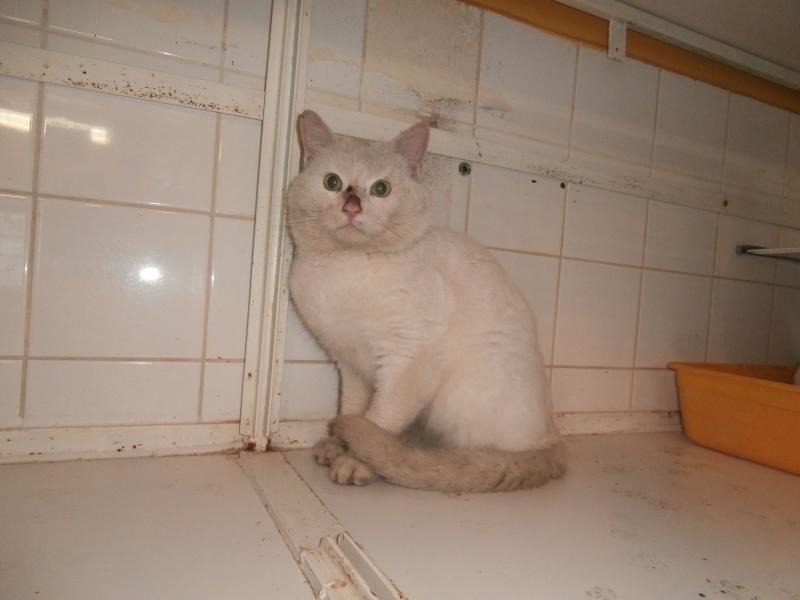 Lupin (mâle blanc crème, poils mi-longs) Pc140410