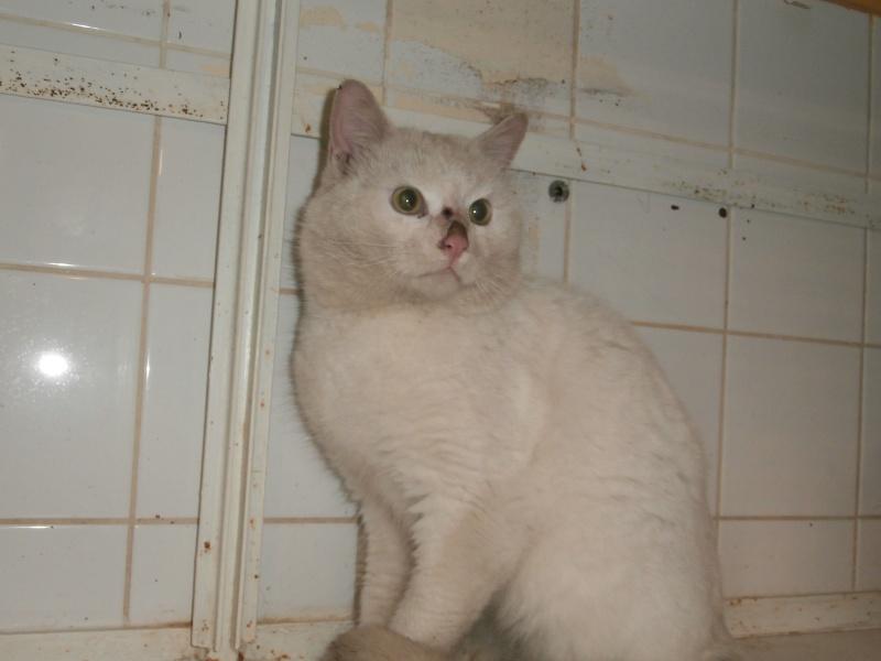 Lupin (mâle blanc crème, poils mi-longs) Pc140411