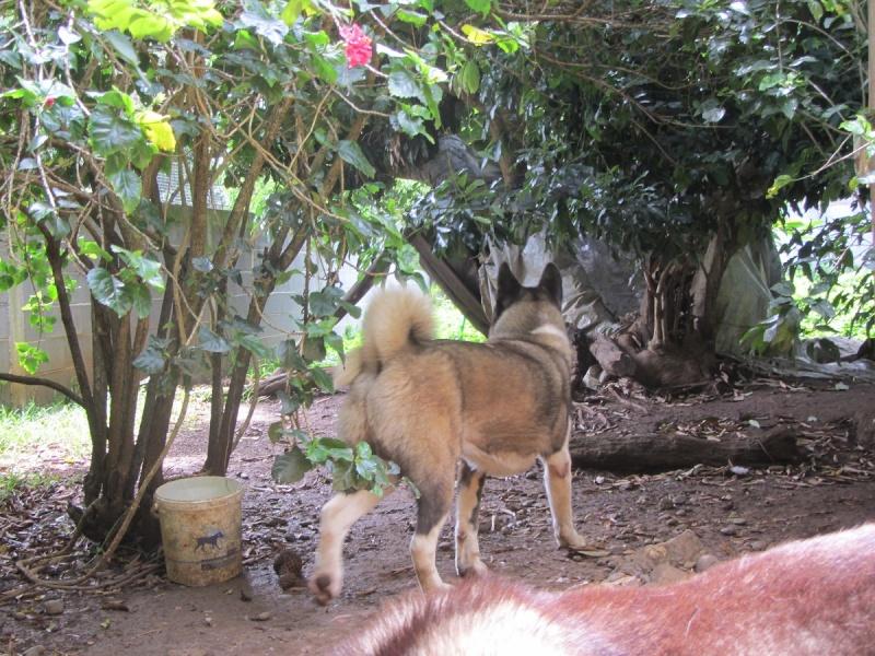 Portée Chessy x Mustang... 2013-693